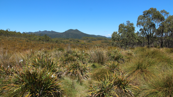 Platypus Bay Tasmanie